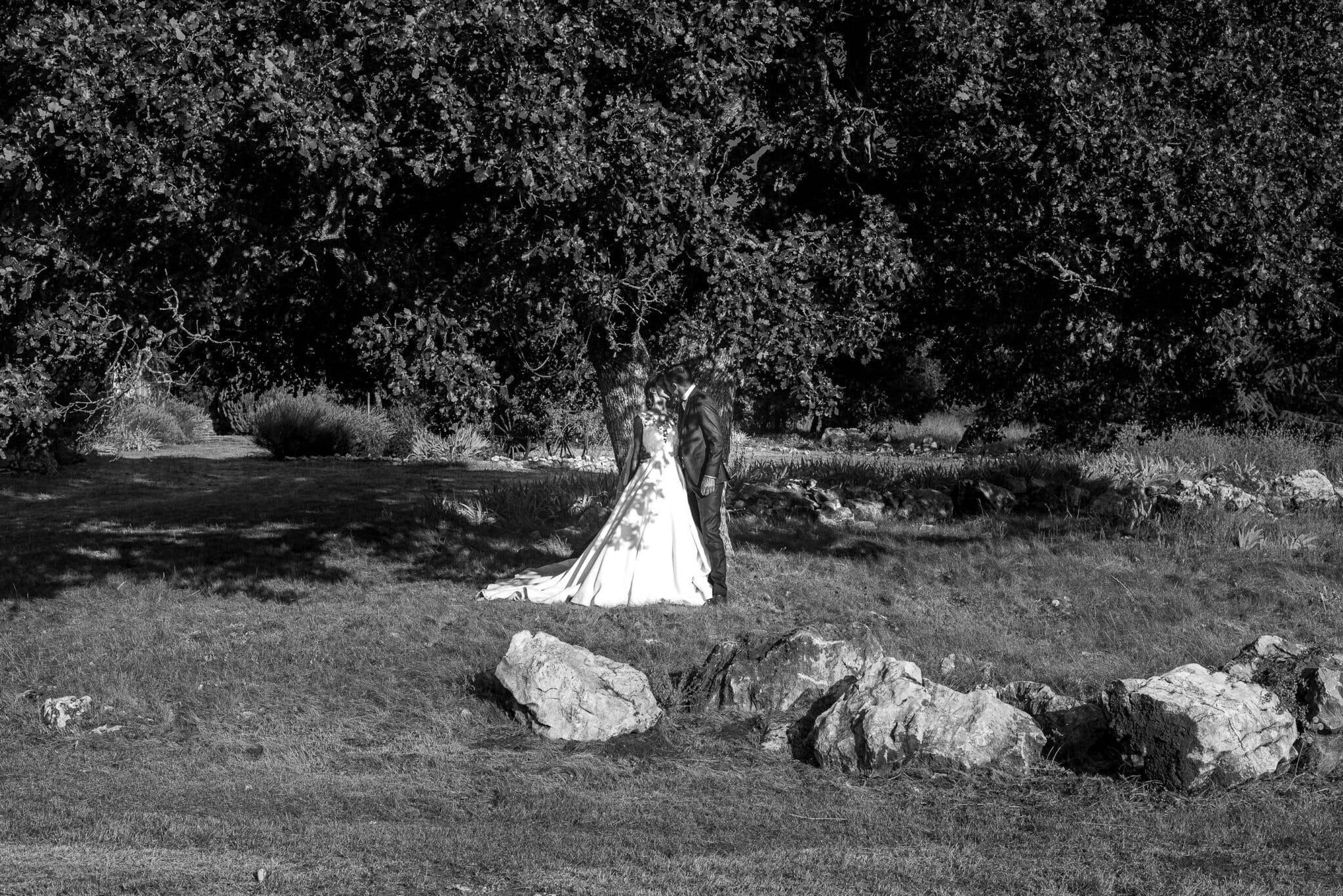 The newlyweds under under the hundred-year-old oak tree